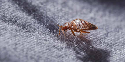 Local bed bug control services