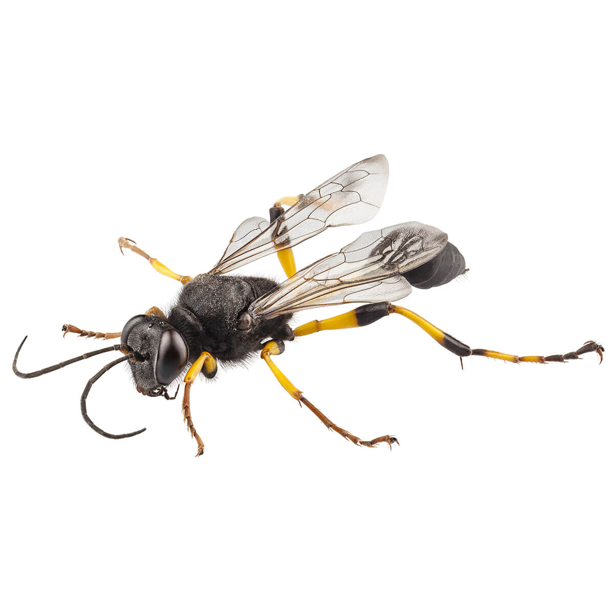 Wasps - Featured Image