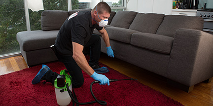 Pest technician looking for crawling pests