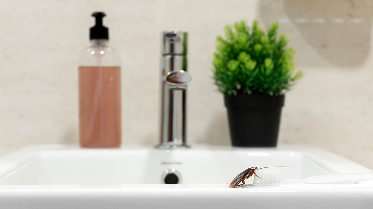 Are Cockroaches Attracted to Light